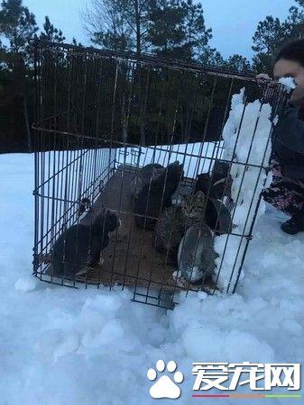 a_一笼小猫被遗弃雪地 12条小生命差点白白送命[新闻]